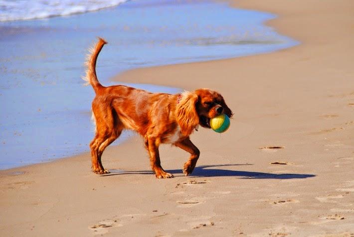 correr con perros en verano