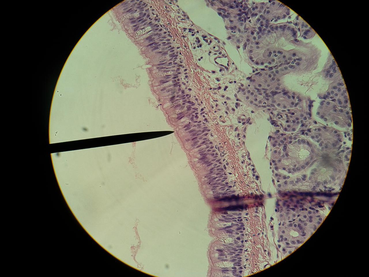 Human Anatomy Bio 120  Exam 1 Slides