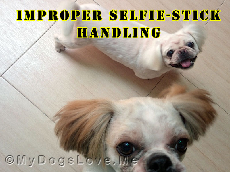 my dogs love me doggy gram dog telegrams. Black Bedroom Furniture Sets. Home Design Ideas