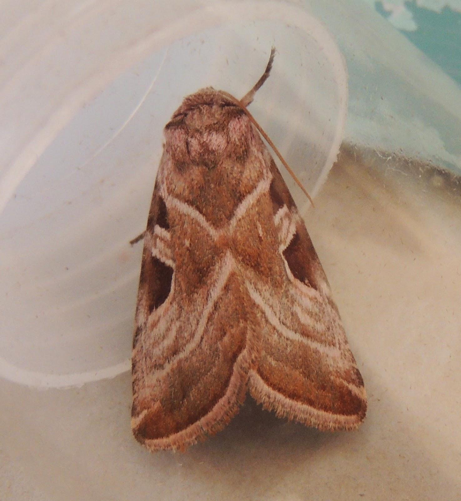 Gary\'s Birding Blog: Butterflies and a Moth (Camberwell Beauty)