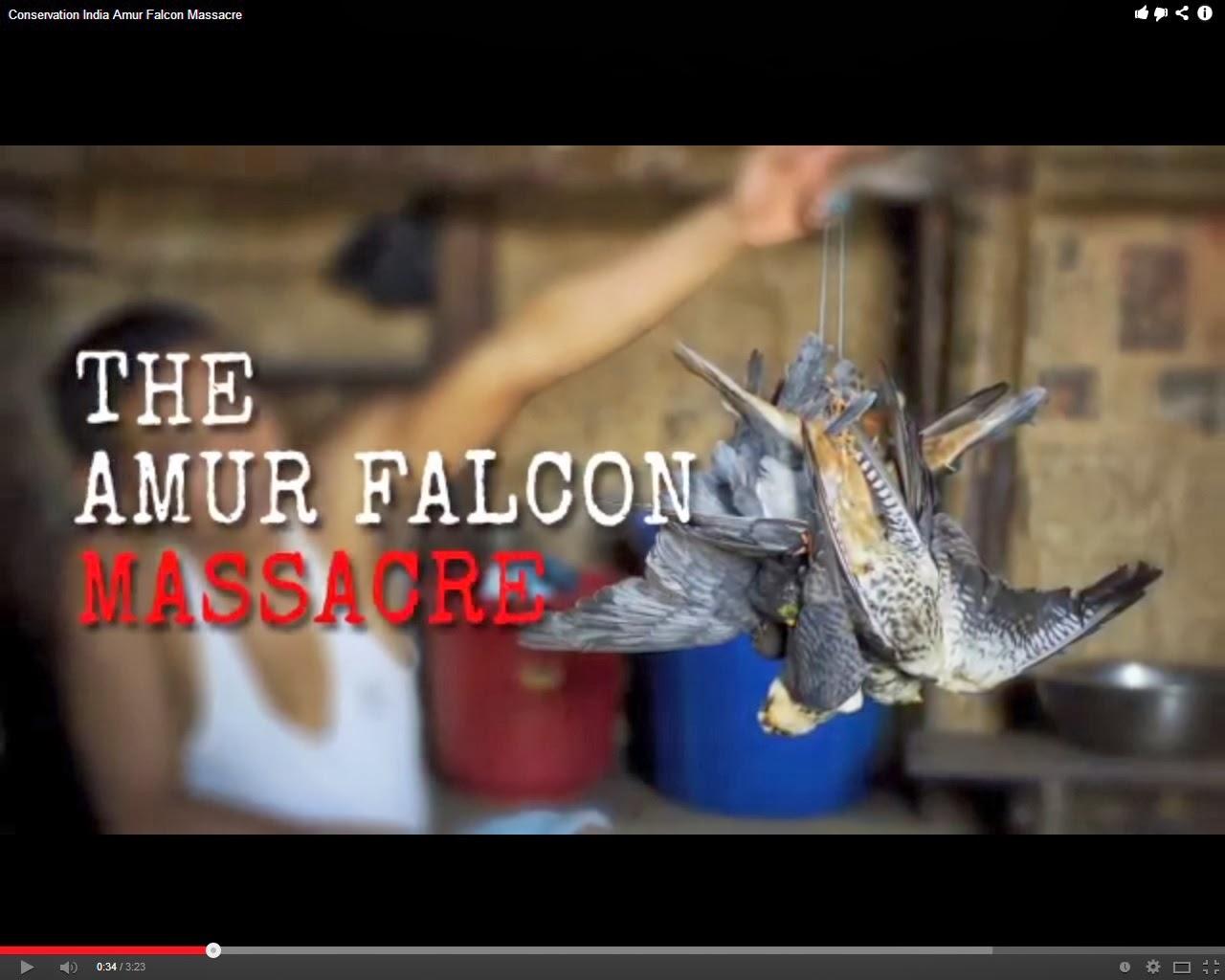 Masacre de halcones.