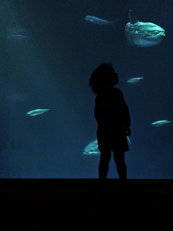 Monterey Bay Aquarium - The Open Sea