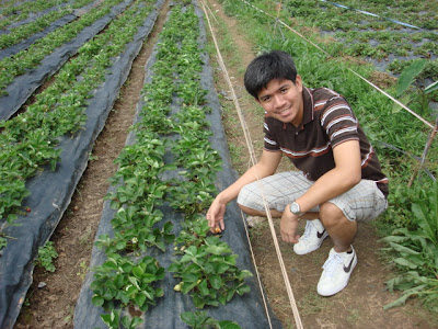 Baguio strawberry farm_04