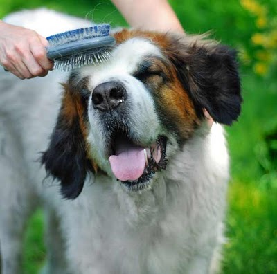 Paws Up Dawg Dog Grooming 101
