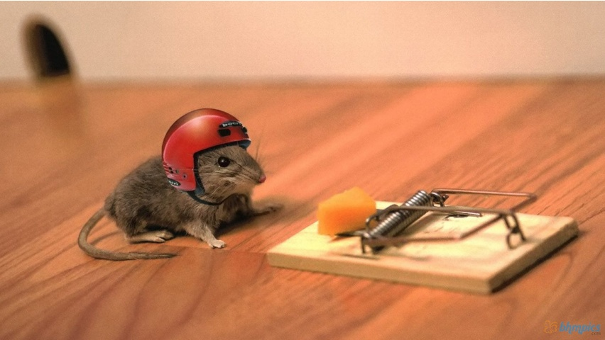 Funny Mouse Wearing Helmet