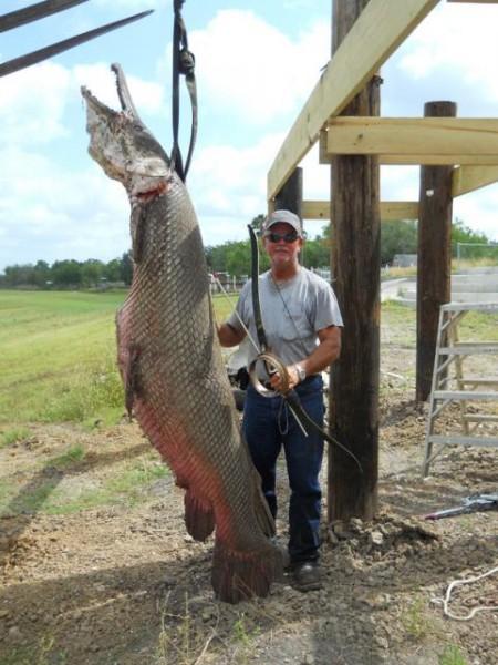 Alligator gar pictures fish tales for Gar fish texas