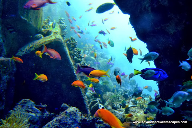 Colorful corals and fishes at the Lost Chambers