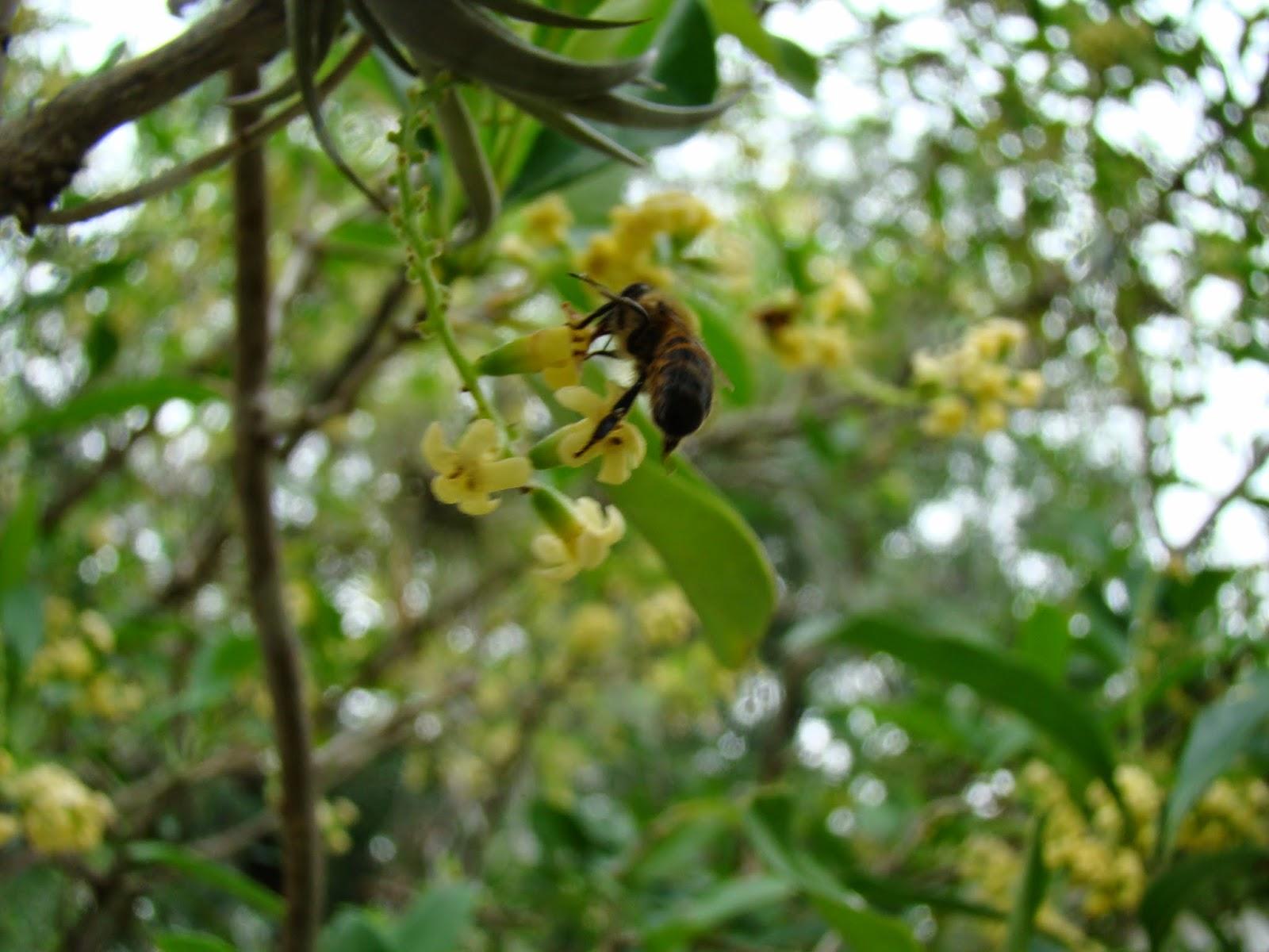 Abejas aliadas en el jard n for Ahuyentar abejas jardin