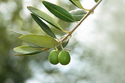 ........Min Nettbutikk .....         hudprodukter av oliven