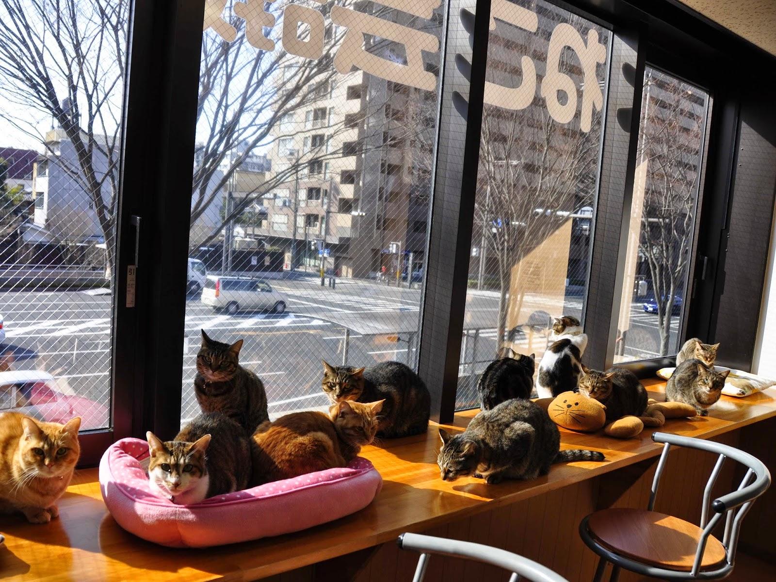 Кошачье кафе Catfé 09
