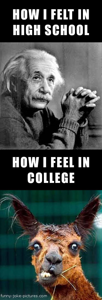 Funny I Felt School College Einstein Caption Image