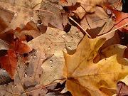 Y el Otoño llegó hojas otono