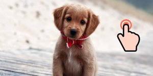 Cachorros tamaño mediano: