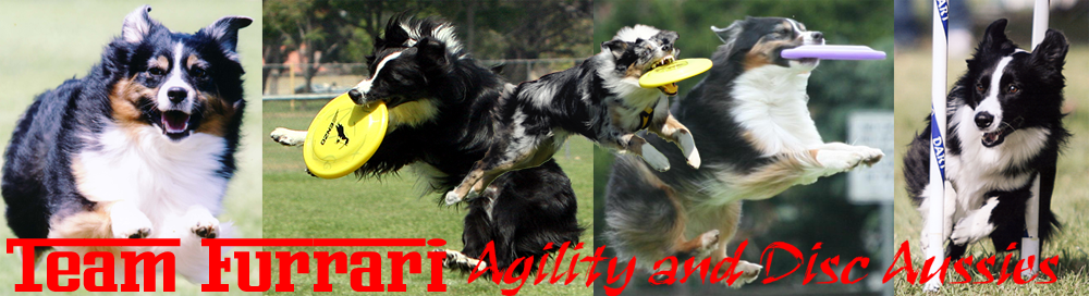 Team Furrari - Agility and Disc Aussies