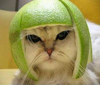 Gambar Lucu Kucing pict