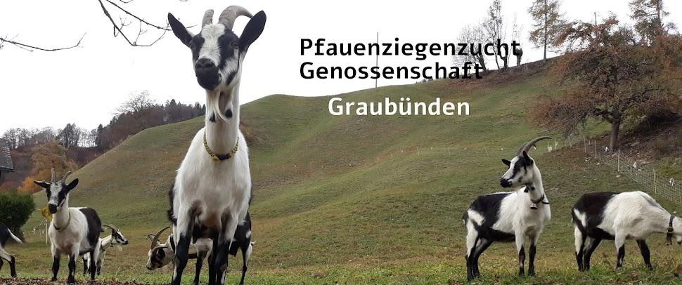Pfauenziege GR