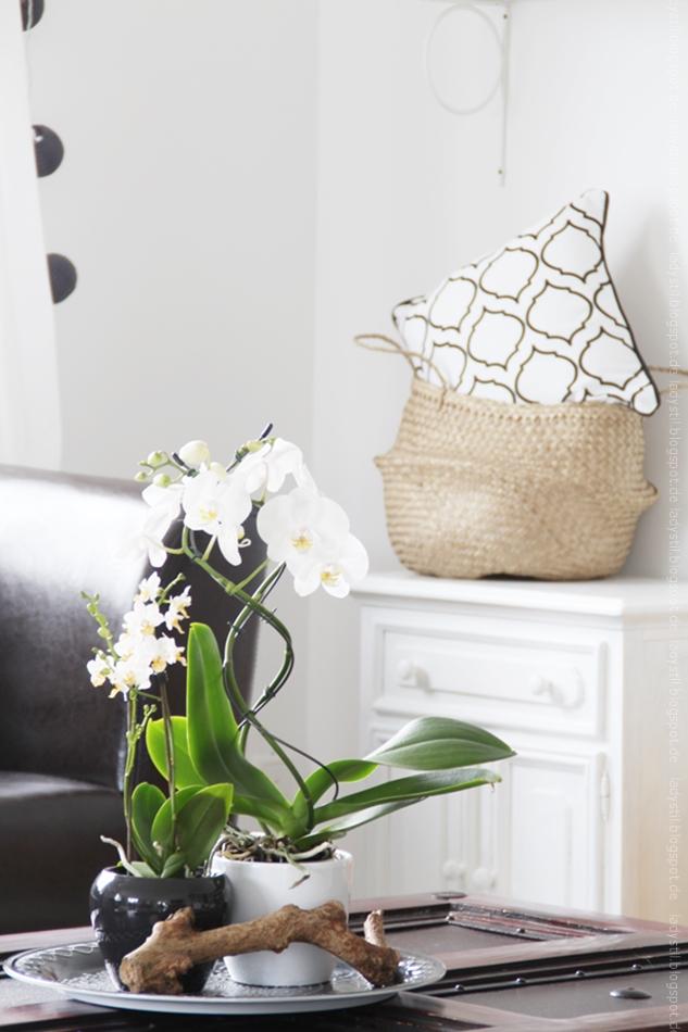 weiße Orchidee auf Couchtisch mit weißer Kommode im Hintergrund