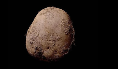 حبة بطاطس، عالم عجائب, Potato #345