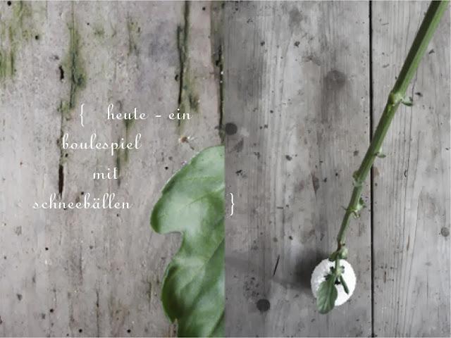 rheingruen Chrysanthemen
