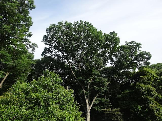 森林,JR原宿駅より明治神宮〈著作権フリー無料画像〉Free Stock Photos