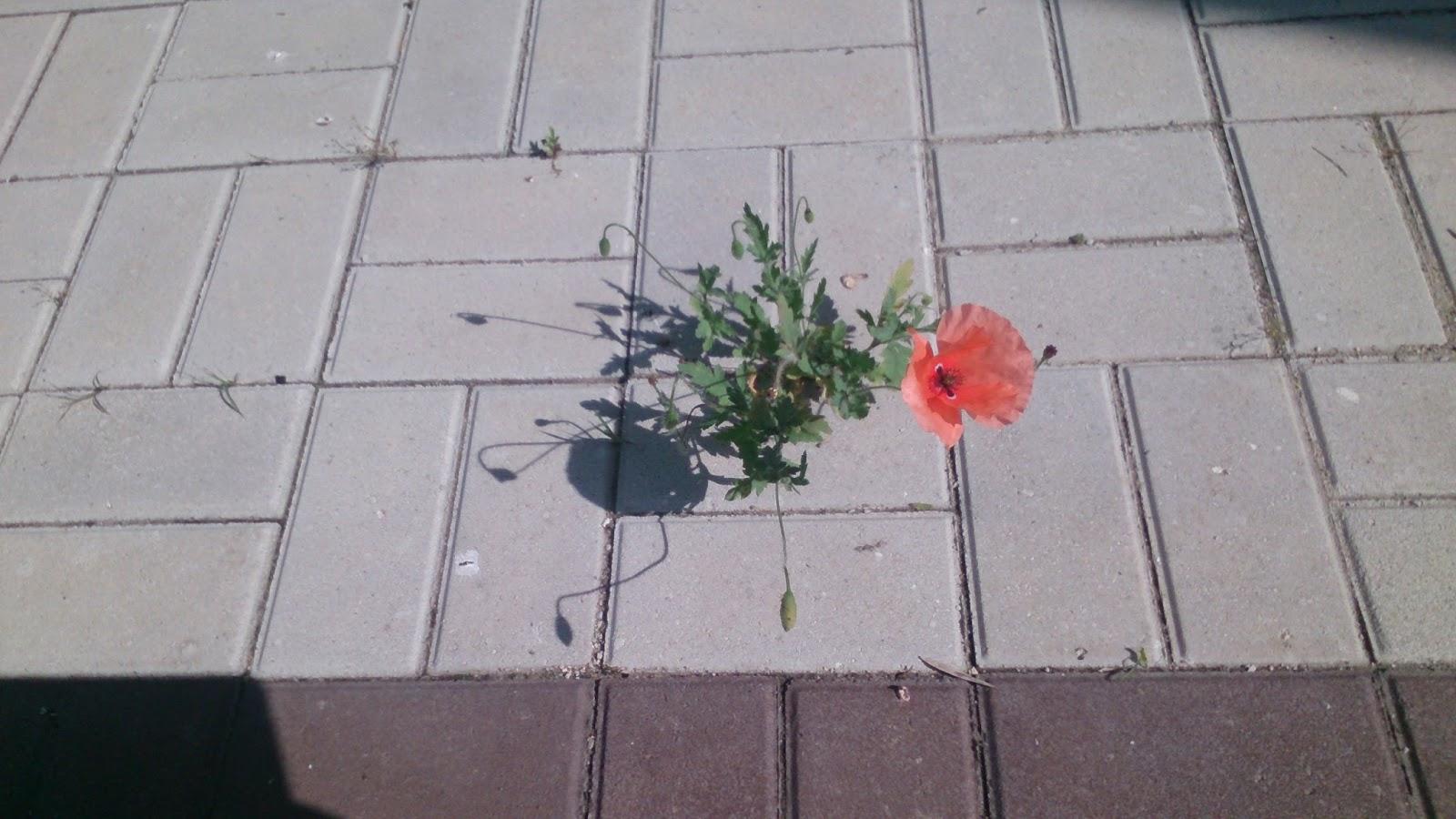 Цветы в асфальте фото