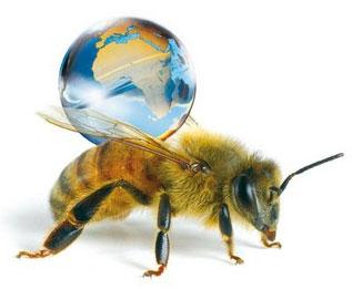 psychologie le plaisir de l 39 exploration et la personnalit aventureuse chez les abeilles. Black Bedroom Furniture Sets. Home Design Ideas
