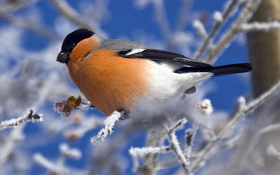 Beautiful bird Photo