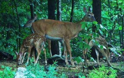Hình ảnh mẹ và con động vật