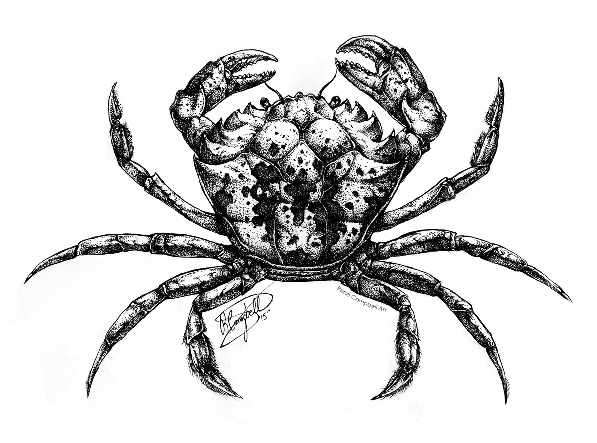 17-Crab-René-Campbell-Art-in-Animal-Doodle-Drawings-www-designstack-co