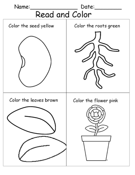 plant coloring pages science experiments - photo#9