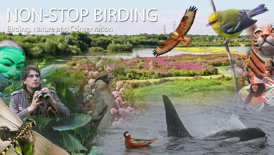 Non-Stop Birding