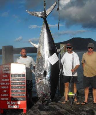 Big Fishes Of The World Tuna Bluefin Southern Tunnus