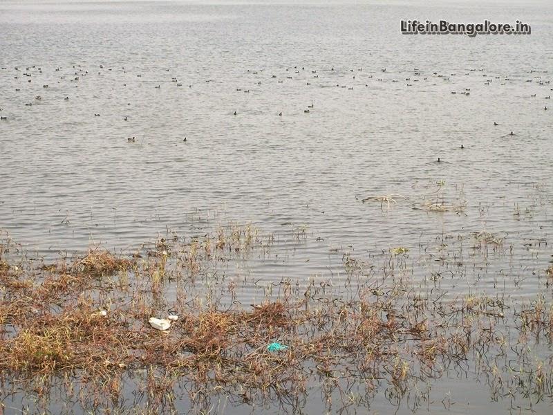 Begur Lake Flora and Fauna