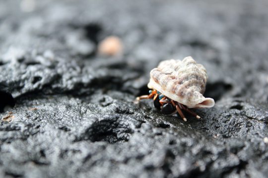 Hermit Crab Colorful Mauritius Wildlife Animals