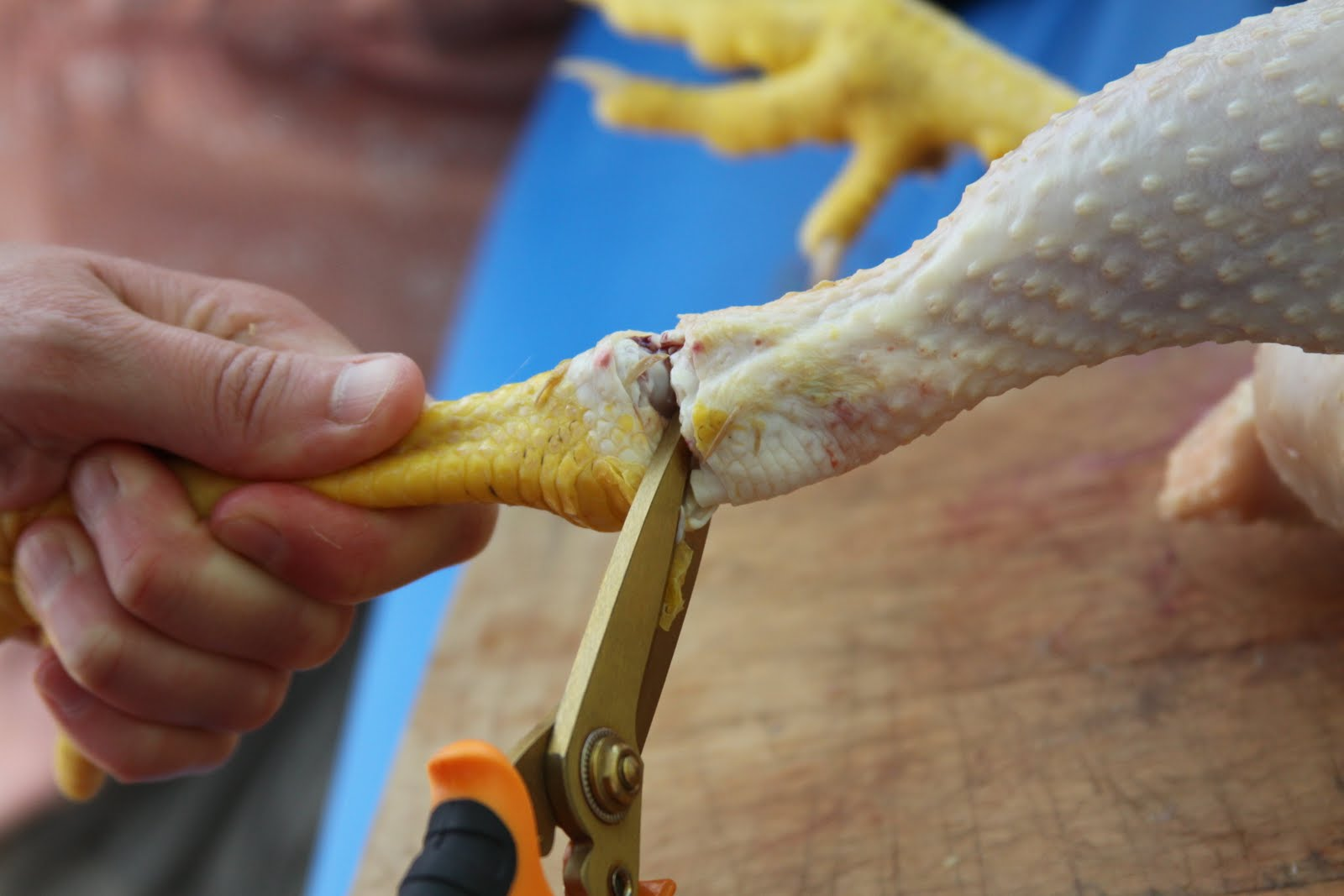 Homestead Revival: Chicken Feet Broth