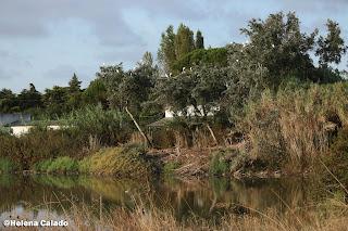 Fotografa das aves no Estuário do Tejo