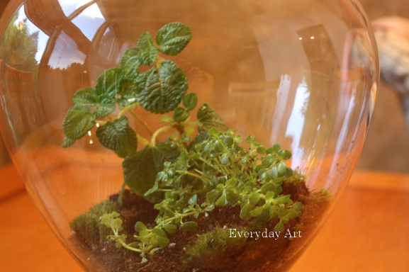 Everyday Art How To Plant A Terrarium