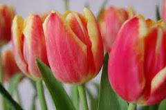 Tavaszt idéző virágunk....
