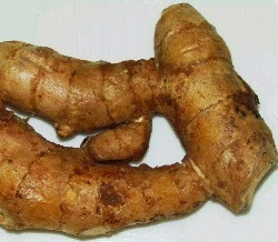 health benefits of javanese turmeric