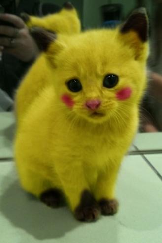 Humor Gráfico: Gatos