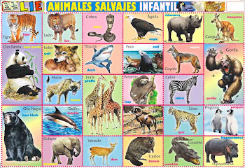 Lámina ANIMALES SALVAJES