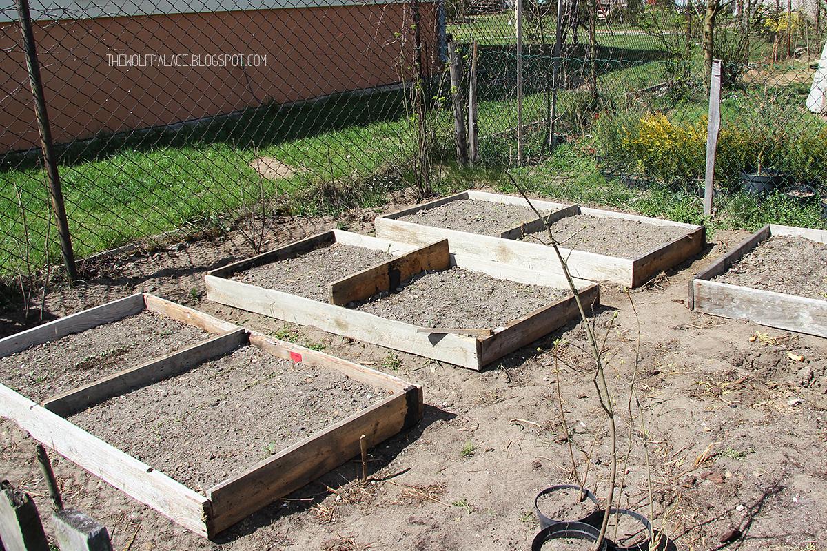garden in box | ogród w skrzyni | ogródek w skrzyni