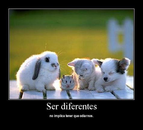 ser diferente no odiar