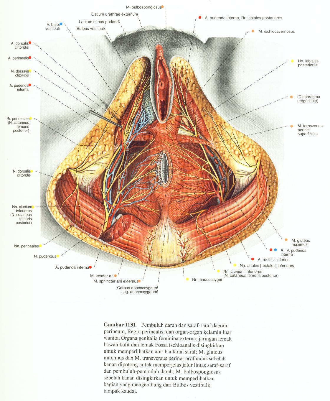 Acozta: Organ Viscera