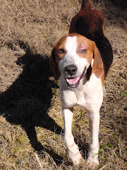 1/23/12 Walker Hound Georgia