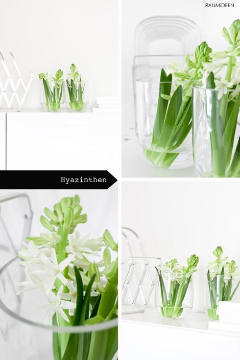 Hyazinthen in der Vase - Blumen im Büro.