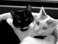 gatos ternura