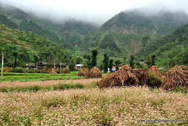 La saison de fleur Tam Giac Mach - Photo An Bui