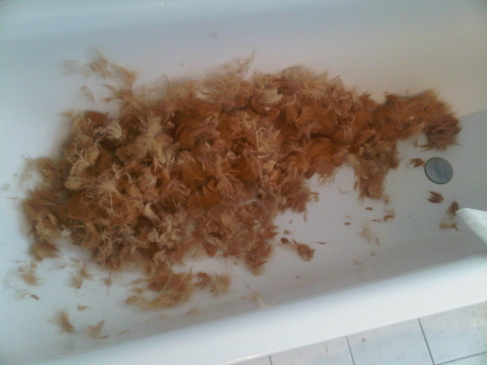 Rotes Katzenfell nach der Rasur in der Badewanne