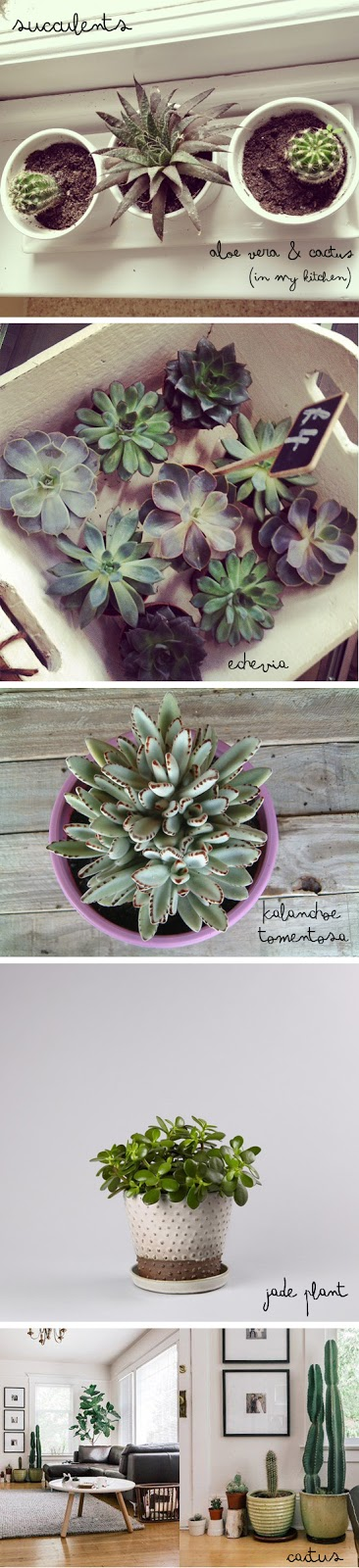 succulents for the home
